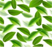 Vektor-Naturhintergrund der grünen Teeblätter nahtloser Stockfoto