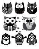 Vektor-Owl Black-Farbe Stockbilder