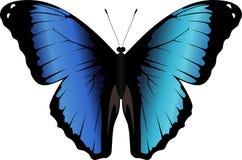 Vektor peruanisches Morpho-Schmetterling Morpho-deidamia Lizenzfreie Stockbilder