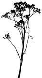 Vektor pflanzt Schattenbilder Stockbilder