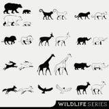 Vektor-Reihe der wild lebenden Tiere Stockfoto