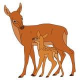 Vektor-Rotwild mit Baby-Rotwild, Vektor-Illustration Stockbild