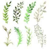 Vektor-Satz Blumen an gemalt im Aquarell Lizenzfreie Stockbilder