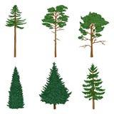 Vektor-Satz der Karikatur Pin Trees, Zeder, Fichte vektor abbildung