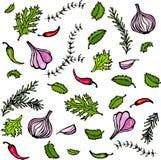 Vektor-Satz Gewürze und Gemüse Rote Zwiebel, Knoblauchzehe, Petersilie, Thymian, Rosemary, heißes Chile, Minze Lizenzfreie Stockfotos