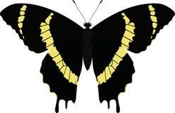 Vektor Schmetterling lokalisiertes Papilio-garamas abderus Stockbilder