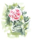 Vektor som är blom- av målade röda Rose Watercolor Royaltyfri Fotografi