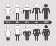 Vektor som är infographic av pilprocentsatsdiagram, män och kvinnlig Royaltyfri Foto