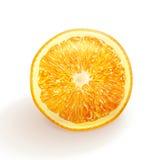 Vektor som drar den realistiska apelsinen Royaltyfri Fotografi