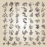 Vektor stellte ein: caligraphic Blumenauslegung Lizenzfreies Stockbild