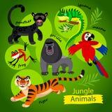 Vektor stellte - nette wilde Tiere des Dschungels ein Stockbild