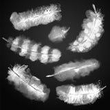 Vektor-stellten transparente Aquarell-Vogel-Federn weiß auf Schwarzem ein lizenzfreie stockfotografie