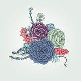 Vektor Succulents-Blumenzusammensetzung Saftige Verzierung Natur lizenzfreie abbildung