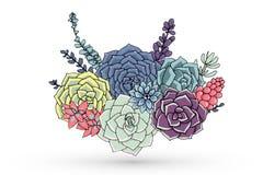 Vektor Succulents-Blumenzusammensetzung Saftige Verzierung Natur stock abbildung