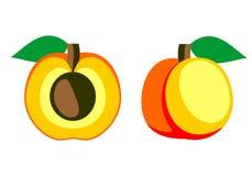 Vektor trägt Illustration Früchte Ausführliche Ikone der Aprikose, ganz und halb, lokalisiert über weißem Hintergrund Lizenzfreie Stockfotos