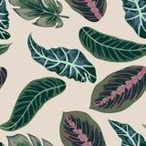 vektor Tropiska sidor, djungel lämnar den sömlösa vektorn blom- modellbakgrund vektor illustrationer