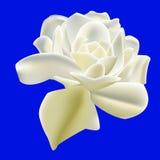 Vektor von weißer Rose Lizenzfreie Stockfotografie