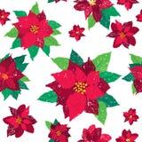 Vektor-Weihnachtsnahtloses Muster rote Poinsettias lizenzfreie abbildung