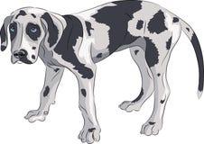 Vektor Welpe der Deutschen Dogge Lizenzfreies Stockfoto