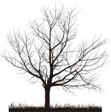 Vektorabbildung des Kirschbaums im Winter Lizenzfreies Stockbild