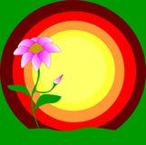 Vektoralleines Blumenrosa Stockfotografie