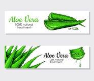 Vektoraloevera hand dragit baner Naturlig kosmetisk ingrediens _ stock illustrationer