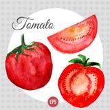 Vektoraquarell mit heller roter Tomate und Lizenzfreie Stockfotos