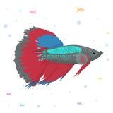 Vektoraquariumfisch-Schattenbildillustration Aquarium-Fischikone der bunten Karikatur flache für Ihr Design Stockfoto