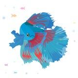 Vektoraquariumfisch-Schattenbildillustration Aquarium-Fischikone der bunten Karikatur flache für Ihr Design Lizenzfreie Stockbilder