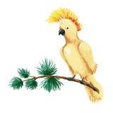 Vektoraraillustration Gult papegojasammanträde på filial Royaltyfri Foto
