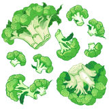 Vektorbakgrund med en modell av broccoli royaltyfri illustrationer