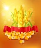 Vektorbakgrund med korn och majskolvar av havre och det röda bandet vektor illustrationer