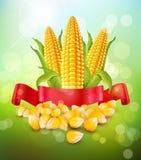 Vektorbakgrund med korn och majskolvar av havre och det röda bandet Royaltyfria Bilder