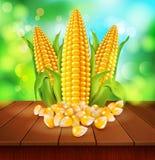 Vektorbakgrund med korn och majskolvar av havre på en trätabl vektor illustrationer
