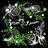 Vektorbakgrundsdesign med citronen och mintkaramellen Arkivfoto