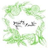 Vektorbakgrundsdesign med citronen och mintkaramellen Royaltyfri Fotografi