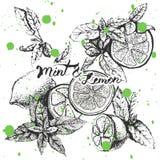 Vektorbakgrundsdesign med citronen och mintkaramellen Royaltyfria Bilder