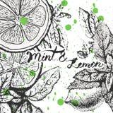 Vektorbakgrundsdesign med citronen och mintkaramellen Royaltyfria Foton