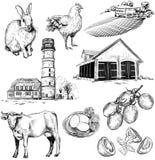 Vektorbauernhof- und -landwirtschaftsbilder Stockfotos