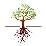 Vektorbaum und grüne Blätter und Wurzeln Stockfoto
