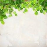 Vektorbaumast verlässt Gipswandhintergrund Stockfotografie