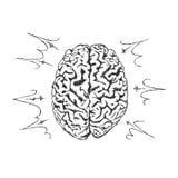 Vektorbegrepp av kreativitet med den mänskliga hjärnan Arkivbild