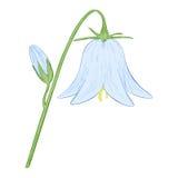 Vektorbell-flower. Fotografering för Bildbyråer