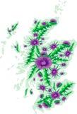 Vektorbildöversikten av Skottland med tisteln blommar Royaltyfria Bilder