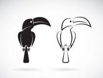 Vektorbild av en tukanfågeldesign vektor illustrationer
