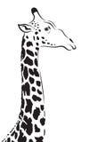 Vektorbild av ett giraffhuvud Arkivbild