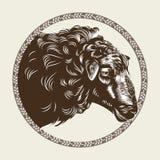 Vektorbild des Kopfes eines Schafs im Stil des Stiches Landwirtschaftliches Weinleseemblem lizenzfreie abbildung