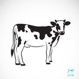 Vektorbild einer Kuh Lizenzfreies Stockbild
