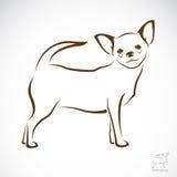 Vektorbild eines Chihuahuahundes Stockbild