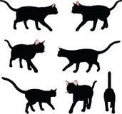 Vektorbild - kattkonturn, i att gå, poserar isolerat på vit bakgrund Royaltyfria Bilder